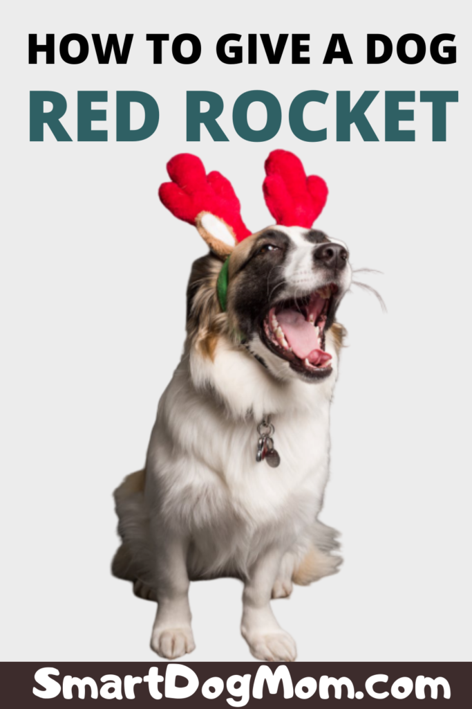 how to give a dog a red rocket