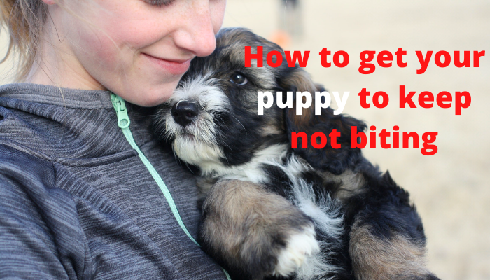 How to get your puppy to keep not biting