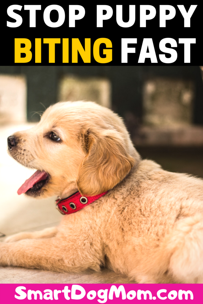 How to Stop Puppy Biting and Train Bite Inhibition