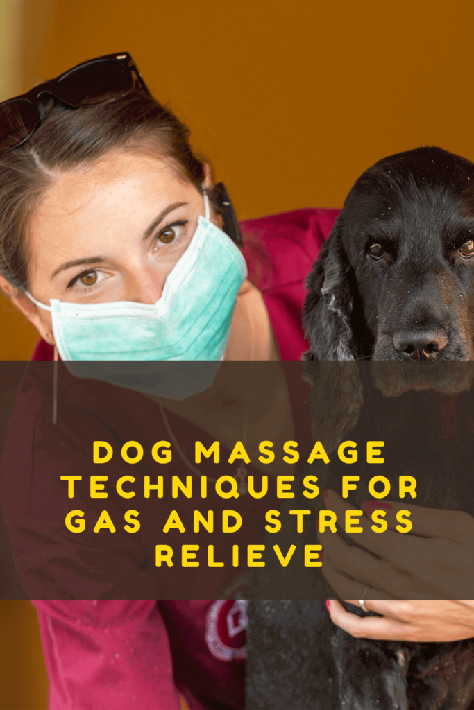 How to Massage Gas Out of Dog