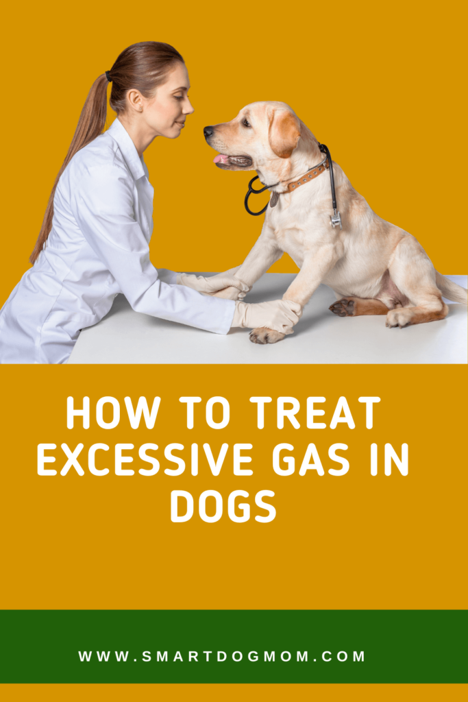 How to Massage Gas Out of a Dog with a Bloated Stomach