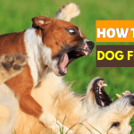 how to stop dogs from fighting in the same household
