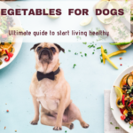How To Prepare Dogs Friendly Vegetables