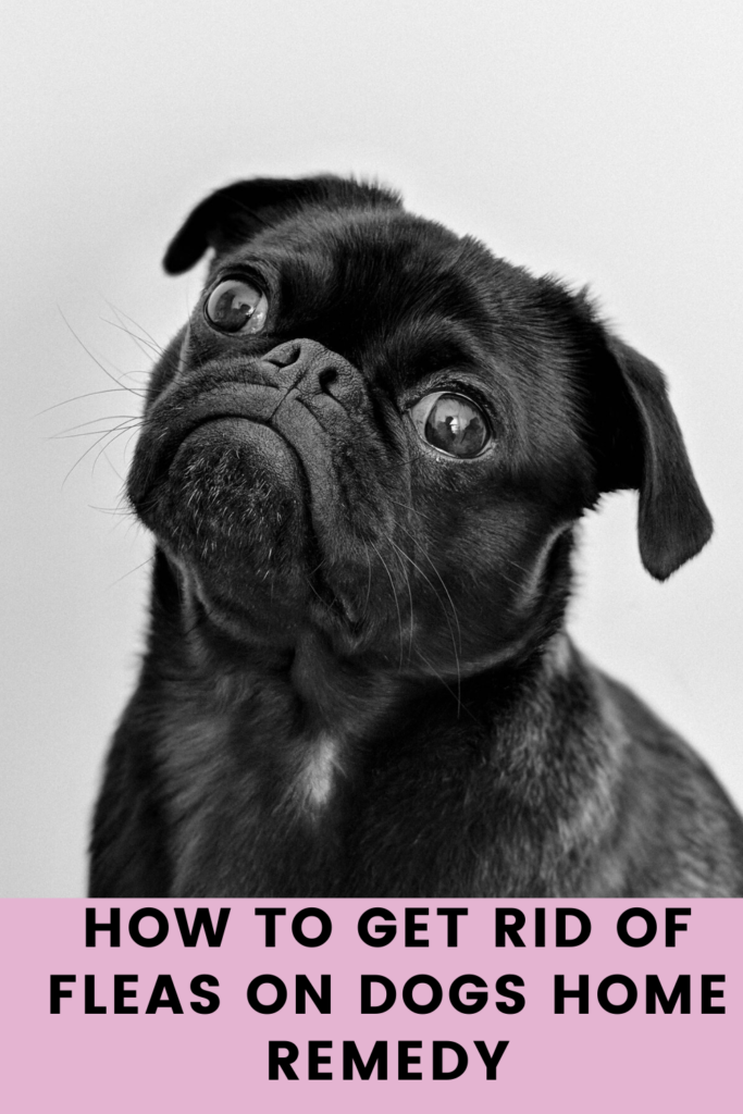 How to Get Rid of Fleas on Dogs Home Remedy