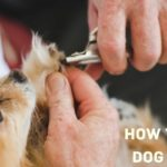 how to cut dog nails safely