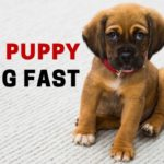 How to Keep a Puppy from Biting Fast