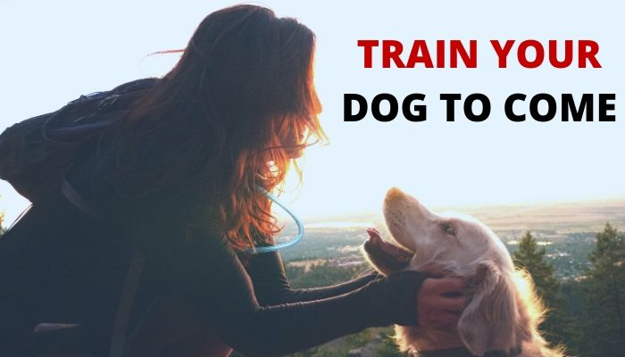 How to Train Your Dog to Come-min