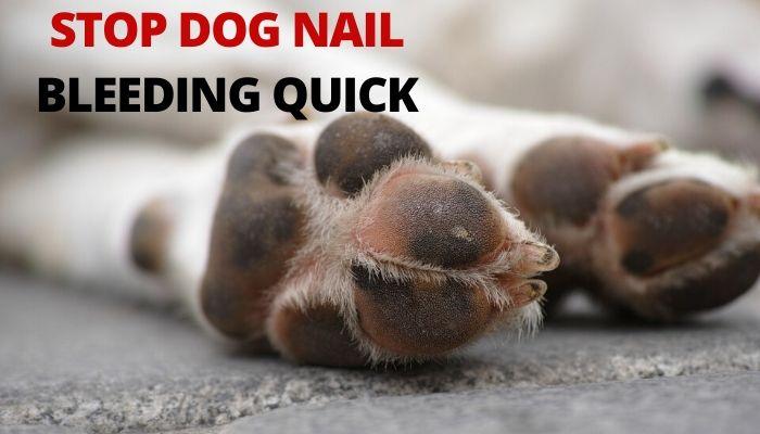 REMOVE DOG FLEAS NATURALLY-min