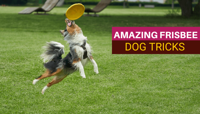 1. How to teach a dog to catch a frisbee-min