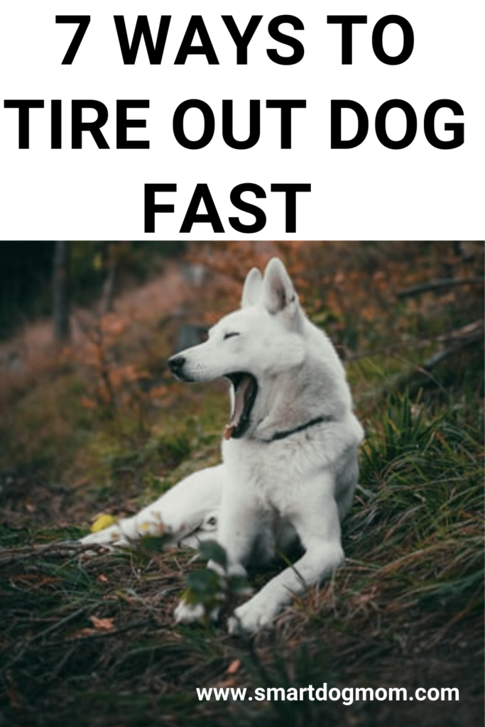 how to tire out a puppy fast