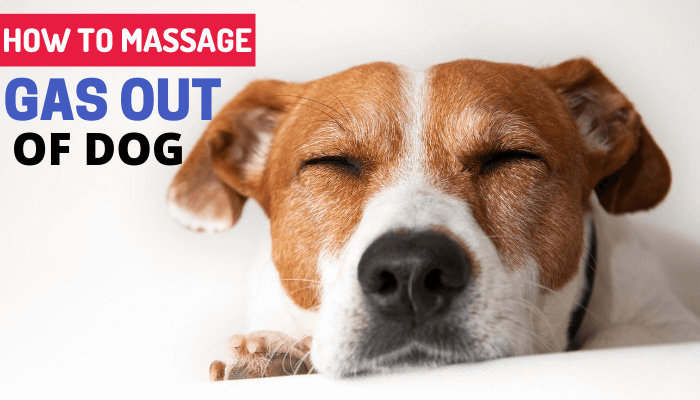 How to Massage Gas Out of Dog?