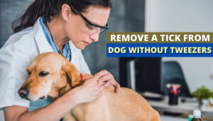 How To Remove a Tick From a Dog Without Tweezers