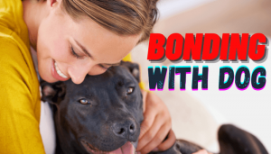 How to bond with your dog