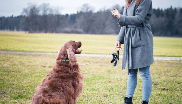 how to bond with your new dog- dog training