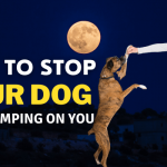 How to Stop A Dog from Jumping on You