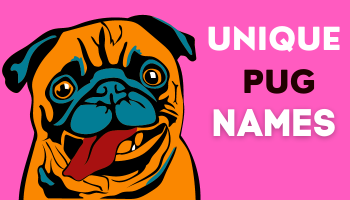 pug names for a boy