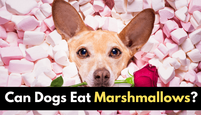 Can Dogs Eat Marshmallows?