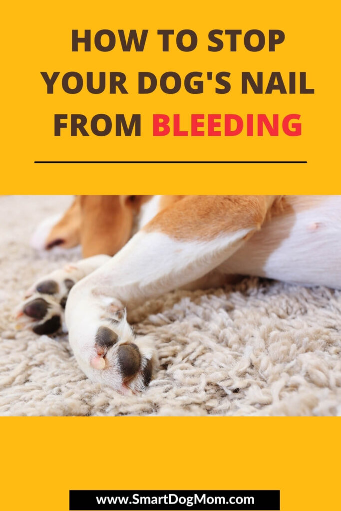 How to Stop Your Dog's Nail from Bleeding