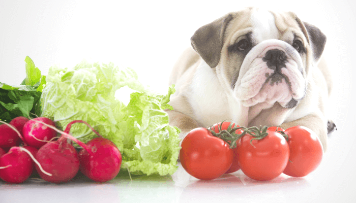 Can I Feed Raw Vegetables to My Dog?