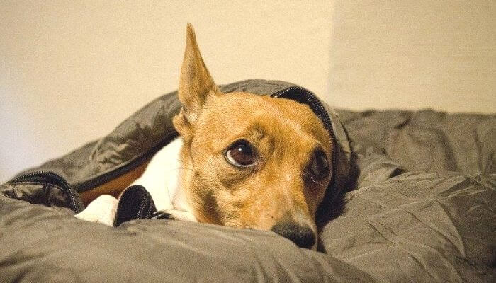 Luxury dog beds - Internal elastic can provide a suffering dog with a healing effect