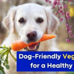 Dog-Friendly Vegetables for a Healthy Pup