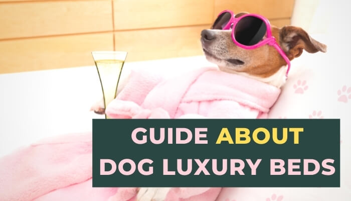 Luxury Beds for Dogs