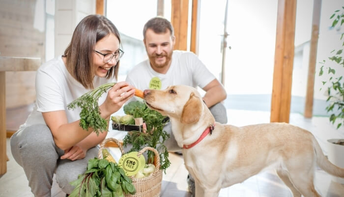 how to get your dog to eat veggies
