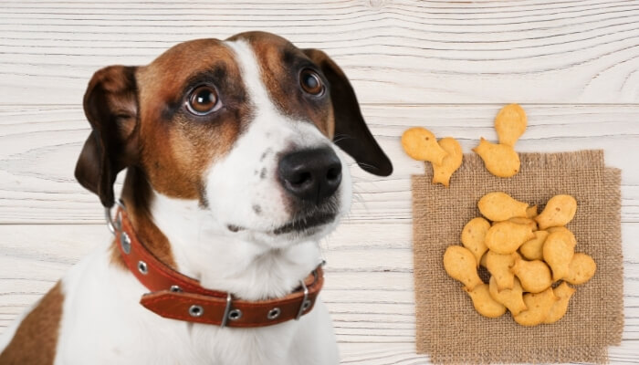 Can Dogs Eat Goldfish Crackers?