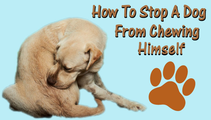 How to Stop a Dog From Chewing Himself